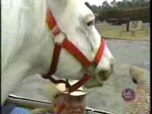 Patches The Coolest Horse.  You Will Not Ever See Something Like This Again.  Trust Me.