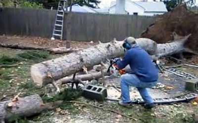 A Huge Storm Took Down This Tree. He Cuts Into It But Seconds Later The Unthinkable Occurs!