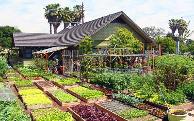 This Tiny Farm Pumps Out 6,000 lbs Of Food Per Year. But Where It's Located Blew My Mind!