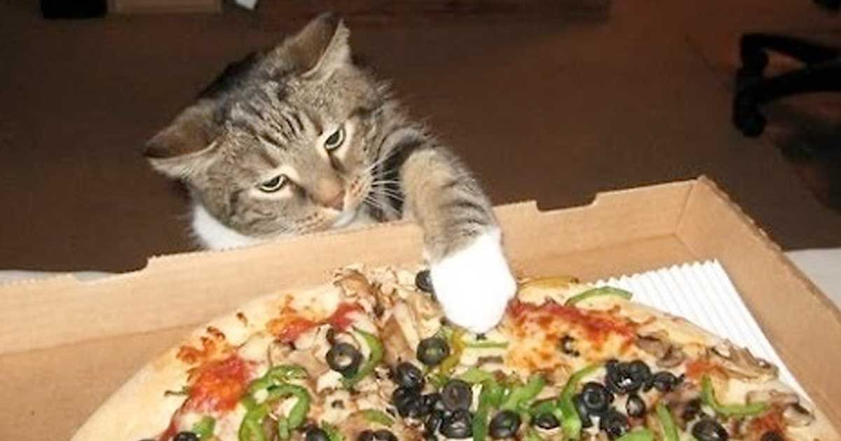 Sneaky Cat Burglars Caught Trying To Steal Pizza - Sneaky cat got caught