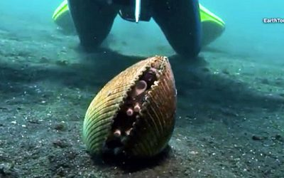 I Thought It Was A Normal Clam But When I Realized What Was Hiding Inside My Jaw Dropped!