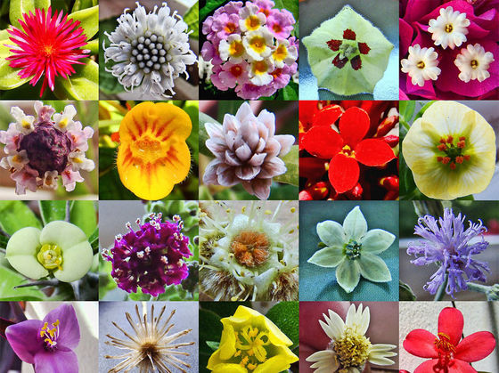 Quiz What Type Of Flower Are You