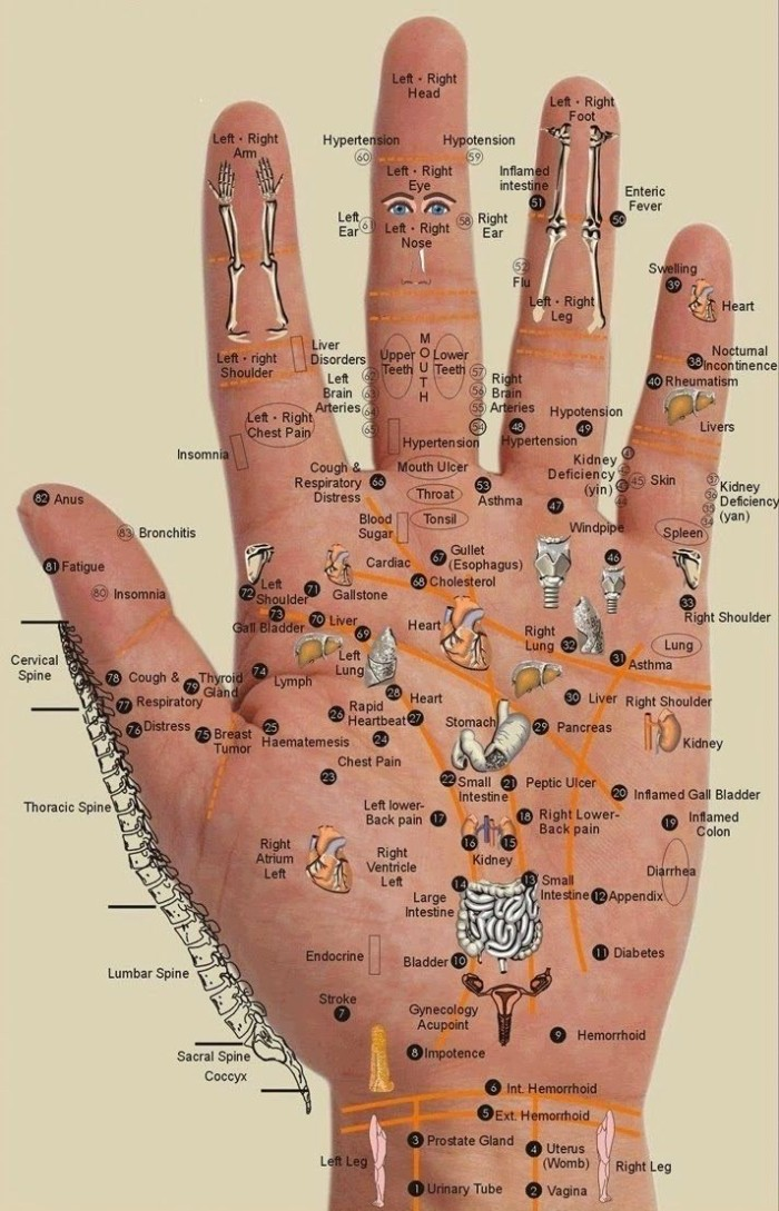 Every Body Part Is In The Palm Of Your Hand - Press The Points For ...