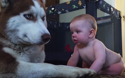 Dog And Baby Show Love For Eachother. This Is Adorable!