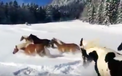 Horses Are Released Into The Snow For The First Time Ever. Now Watch How They React!