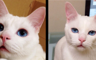This Cat Looks Normal, But Nobody Believed Her When She Described What He Looks Like At Night!