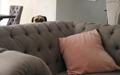 Nobody Believed Her When She Described Her Bullmastiff's Creepy Daily Ritual. So She Caught THIS