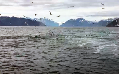 Man Gets The Shock Of His Life While Filming Some Seagulls. This Is Incredible!