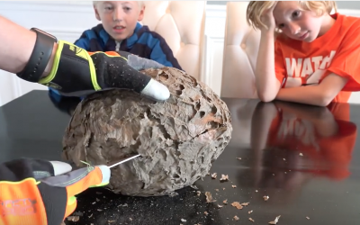 Their Dad Slices Open A Wasps Nest In Front of Them. What He Reveals Inside? Awesome