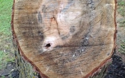 An Extremely Creative Project Idea To Deal With An Unsightly Stump!