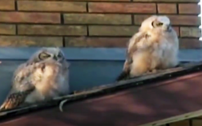 An Owl Poops On Top Of His Buddy. Now Watch His Hysterical Next Move.