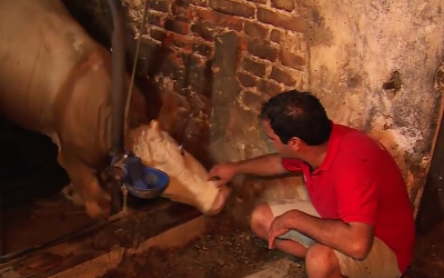 Sad Bull Spent His Life Chained To A Rusty Cage. Now Watch His Reaction When He's Freed.