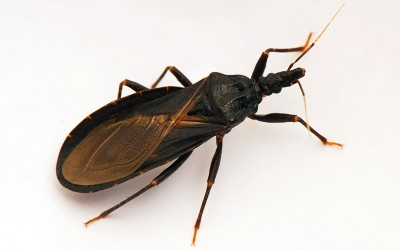 This Isn't a Regular Insect. If You See One Do Not Go Near It. The Reason? Scary!
