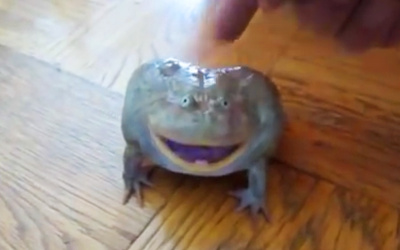 He Places a Finger On This Frog He Discovered In His Home. The Frog's Reaction? OMG!