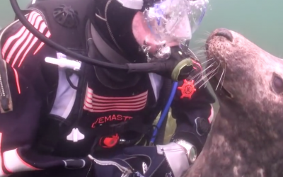 Scuba Diver Has a Once In a Life Time Experience With a Seal In The Ocean!