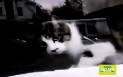 Hilarious Cat Fights The Mailman During Every Delivery. This Is Too Funny!