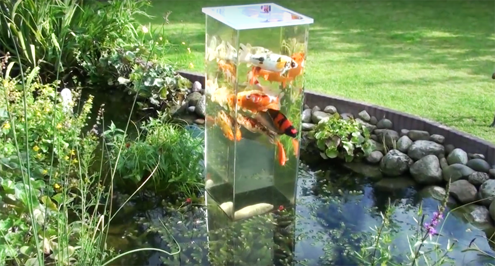 This guy takes an aquarium and turns it over so that it 39 s for Fish tank koi pond