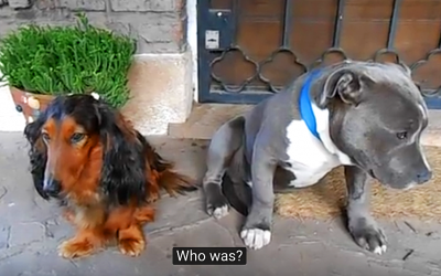 This Guy Confronts His 2 Dogs About Who Ate His Shoes. The Guilty One Confesses In The Funniest Way.