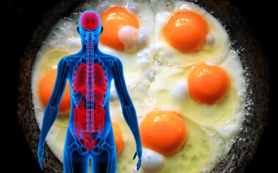 Scientists Recently Discovered The 5 Health Benefits of Eating 3 Eggs Per Day