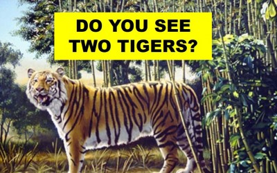 There Are Actually 2 Tigers In This Image. Can You Find The Second Hidden Tiger?