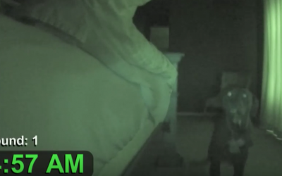 This Guy Set Up A Hidden Camera and Caught His Adorable Pup's Early Morning Ritual.