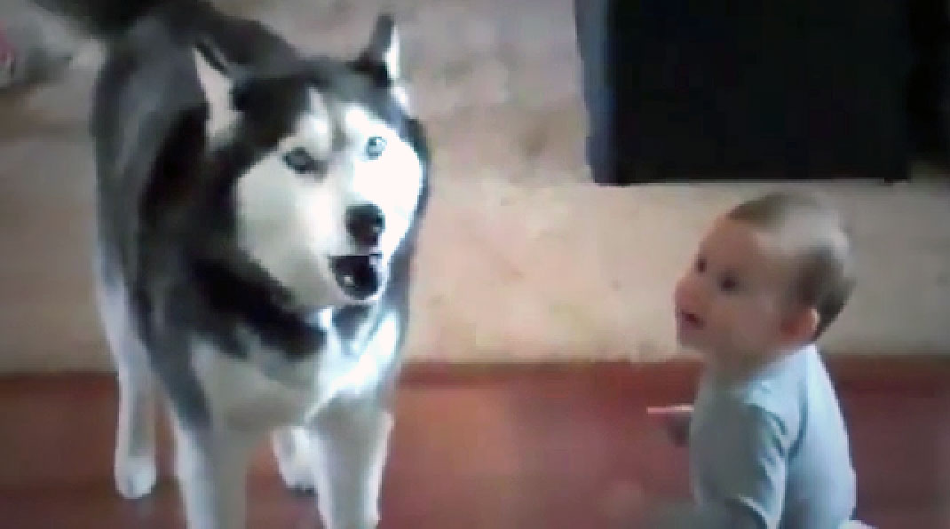 Adorable Little Baby Won 039 T Stop Talking So This Jealous Husky