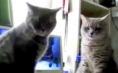 Cats Go Through Their Hilarious Nightly Ritual While Their Human Films The Video