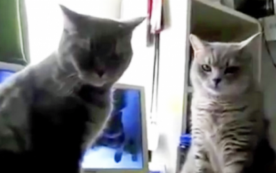 Mama Catches and Films Her Cat's Hysterical Nightly Ritual.