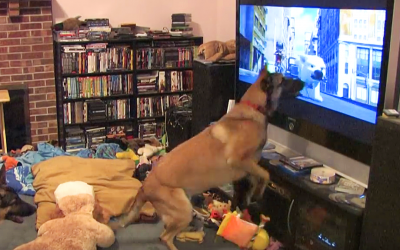 Every Time This Pup's Favorite Movie Is Turned On He Has The Most Hysterical Response Ever.