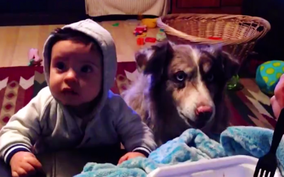 Parents Try To Get Their Baby To Say Mama. But Listen To The Dog's Hysterical Response.