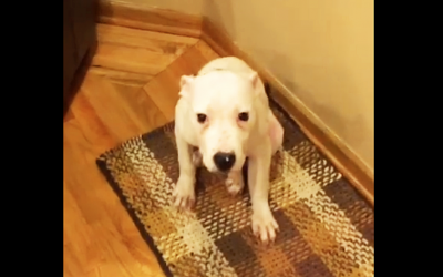 Mama Tells Her Pup To Show His Happy Face. He Proceeds To Make The Most Hysterical Face!
