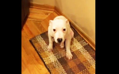 Nobody Believed Mom When She Described What Her Dog Started Doing. So She Captured This.