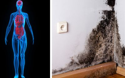 6 Signs You Have Mold Illness and May Not Even Know It!