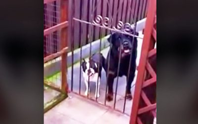 Stranger Walks Past The Gate and Says Hello. The Little One Has The Most Hysterical Answer.