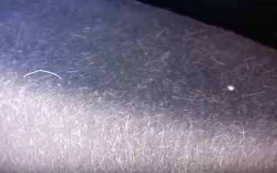Apparently This Simple Trick Is The Quickest and Easiest Way To Remove Dog Hair From Your Car