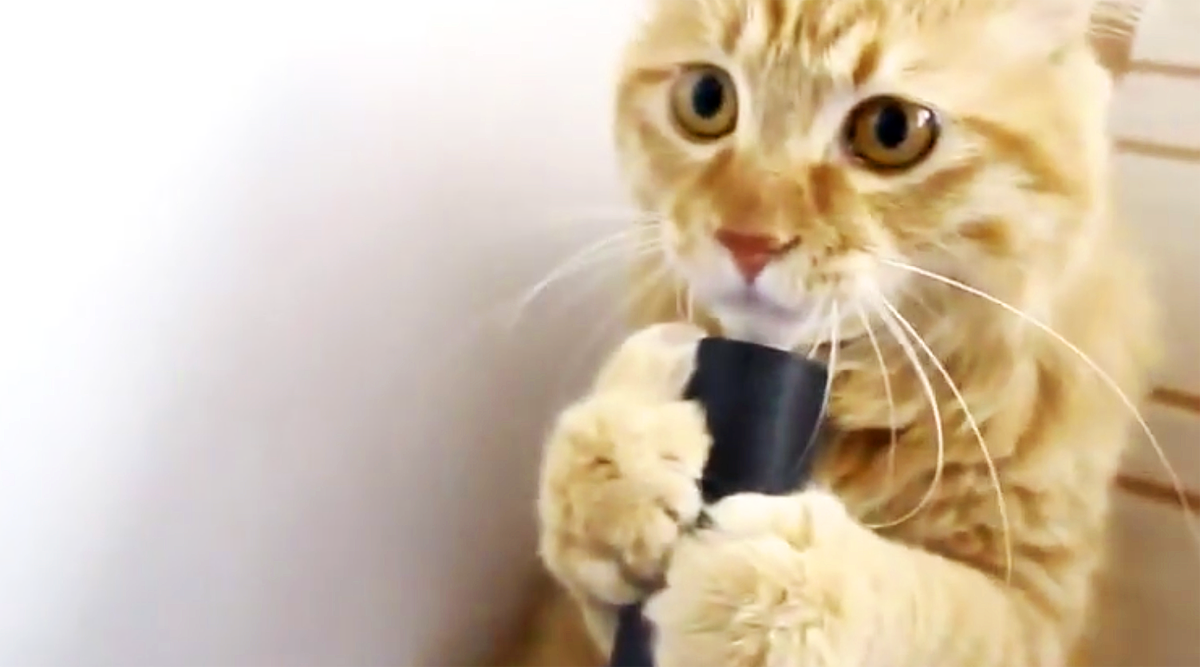 Human Hands This Cat The Vacuum While Its On Now Watch What