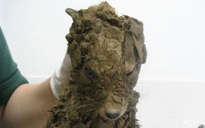 These Guys Found a 'Puppy Covered in Mud.' But Once He's Cleaned They Realize He's Not a Puppy.