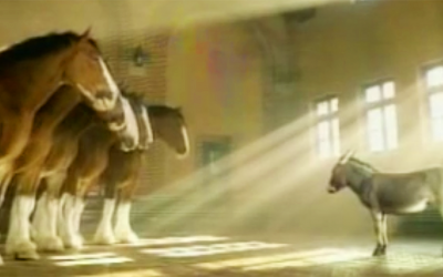 This Little Donkey Meets 5 Giant and Beautiful Clydesdales. Now Listen To His Hysterical Response.