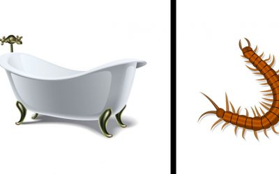 Apparently You Shouldn't Ever Kill a Centipede Inside Your Home. This Is Good Information.