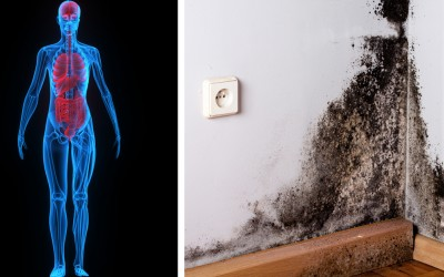 7 Signs and Symptoms You Have Mold Illness and Don't Even Realize It. This Is Good To Know.