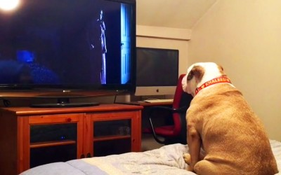 Brave Dog Is Watching a Horror Movie. But Watch Her Hysterical Response When The Scary Part Comes On.