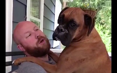 Human Asks This Pup If He's a Dog or a Baby? The Dog Has The Most Hysterical Response Ever.