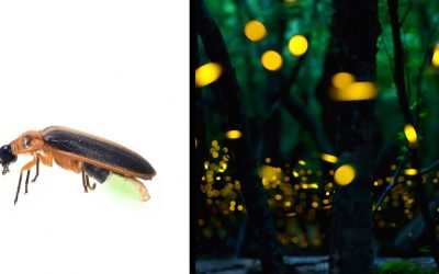 Apparently This Is The Scary Reason Why You Don't See Fireflies On Your Lawn Anymore