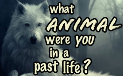 Quiz: In Your Past Life, What Type Of Animal Were You? Find Out Below.