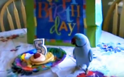 This Parrot's Mom Gives Him a Birthday Gift. Now Watch How Excited He Gets When He Sees His Present.