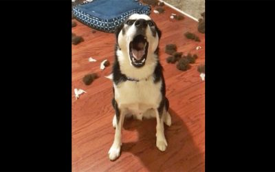 Mama Confronts Her Dog About The Giant Mess. He Denies His It With a Huge Tantrum.