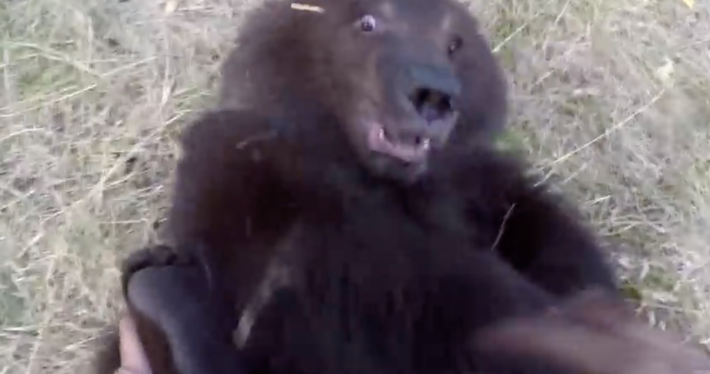 Baby Bear Approaches a Human But The Unexpected Happens When