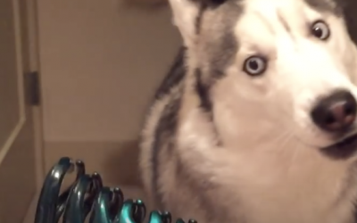 Everytime His Human Pulls Out The Scary Green Hairclip This Dog Has a Hysterical Fit