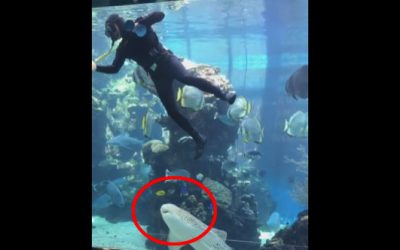 A Shark Swims Up To A Diver At An Aquarium And Surprises Him. Then Things Get Strange!