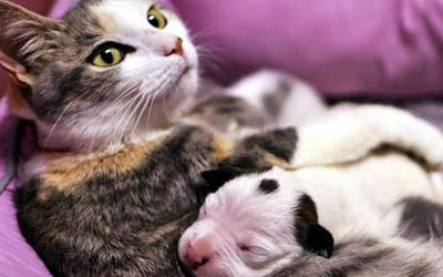 Video: Newborn Pitbull Puppy Was About To Die. But Then This Cat Did Something Unbelievable!